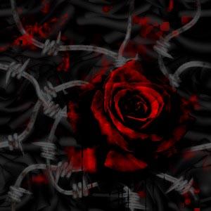 [Imagen: rose.jpg]